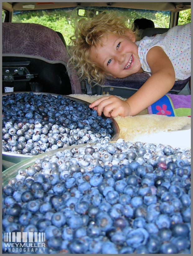 A.S. with caramelize life picking blueberries