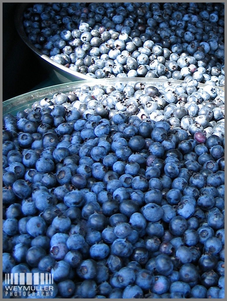 Bountiful blueberries