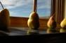 Pears window 10.12RKW_4068