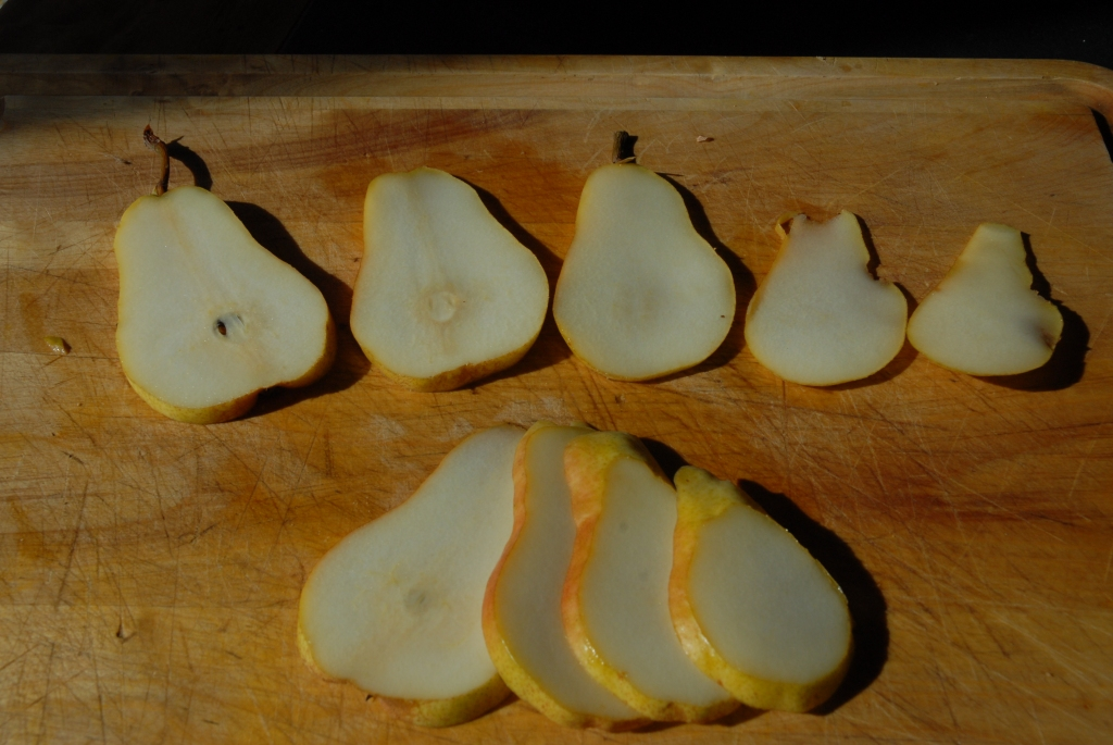 Pears headed for the dryer