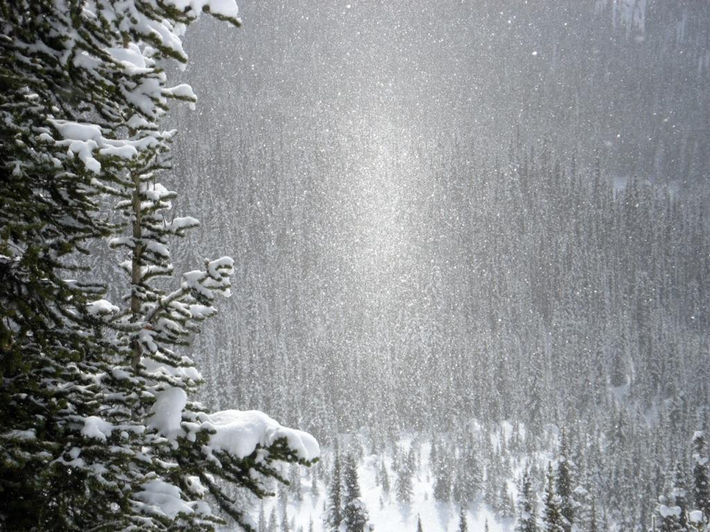 Sunlit snowy day