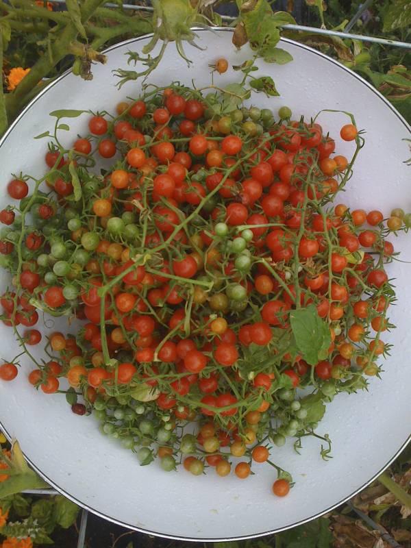 Garden Bounty Caramelizes Life