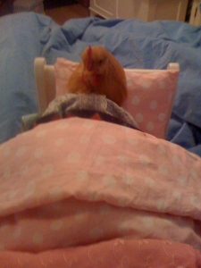 Chicken tucked into bed
