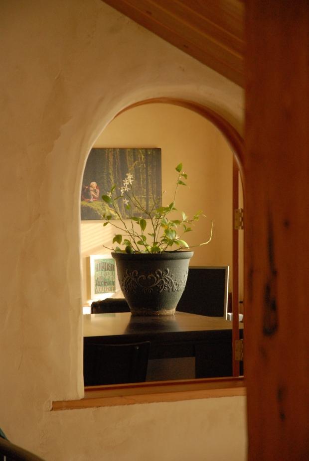 Blooming potted indoor lemon tree